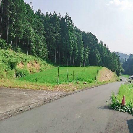駆除ザウルスのおーちゃんです! 先日京都府 京丹波町にハクビシンの駆除に伺いました!ここ最近晴れ模様が続き暑さに負けそうです